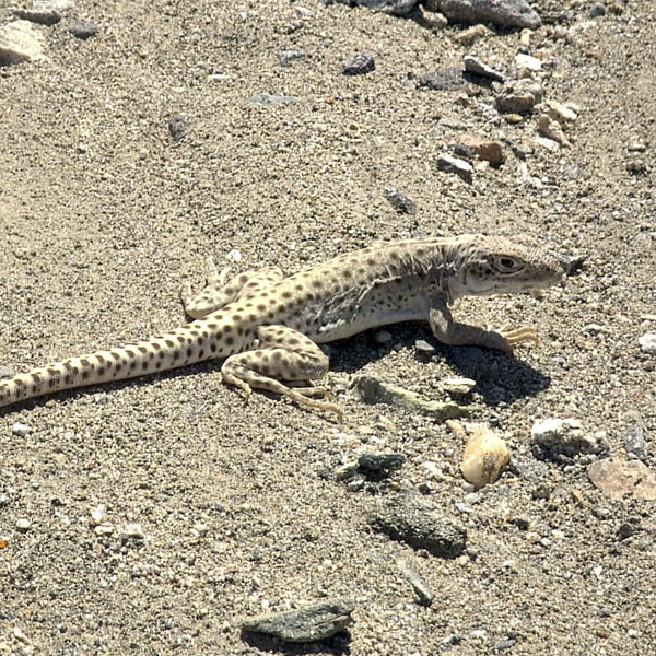 Humans not directly responsible for North American reptile deaths