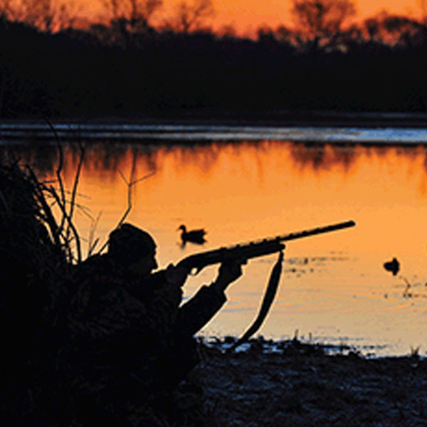 Hunting and population decline