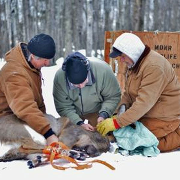 Little Girl's Point research part of CWD study