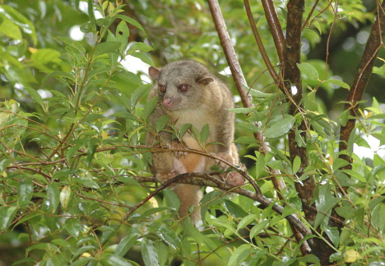 Research priorities for the small carnivores of Colombia.