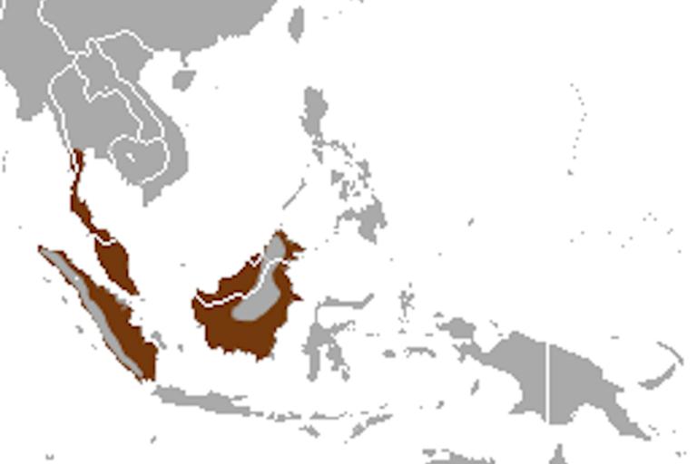 Predicted distribution of the otter civet Cynogale bennettii (Mammalia: Carnivora: Viverridae) on Borneo