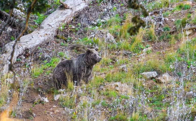 Brown bear and Persian leopard attacks on humans in Iran