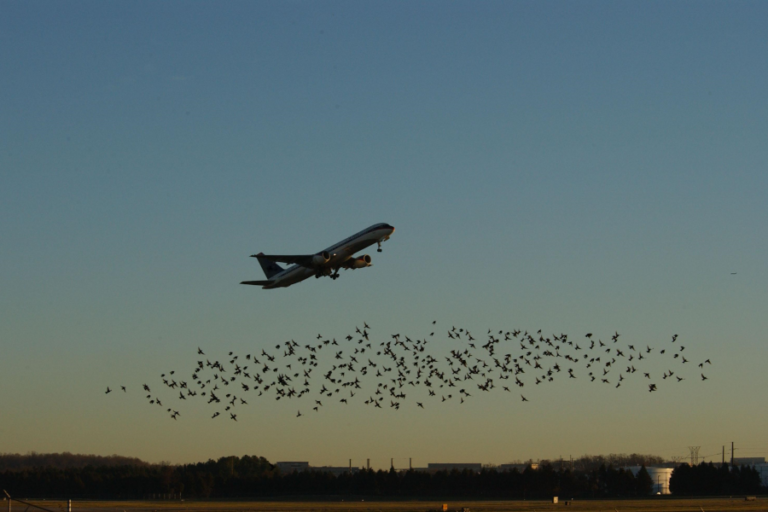 Identification of off airport interspecific avian hazards to aircraft