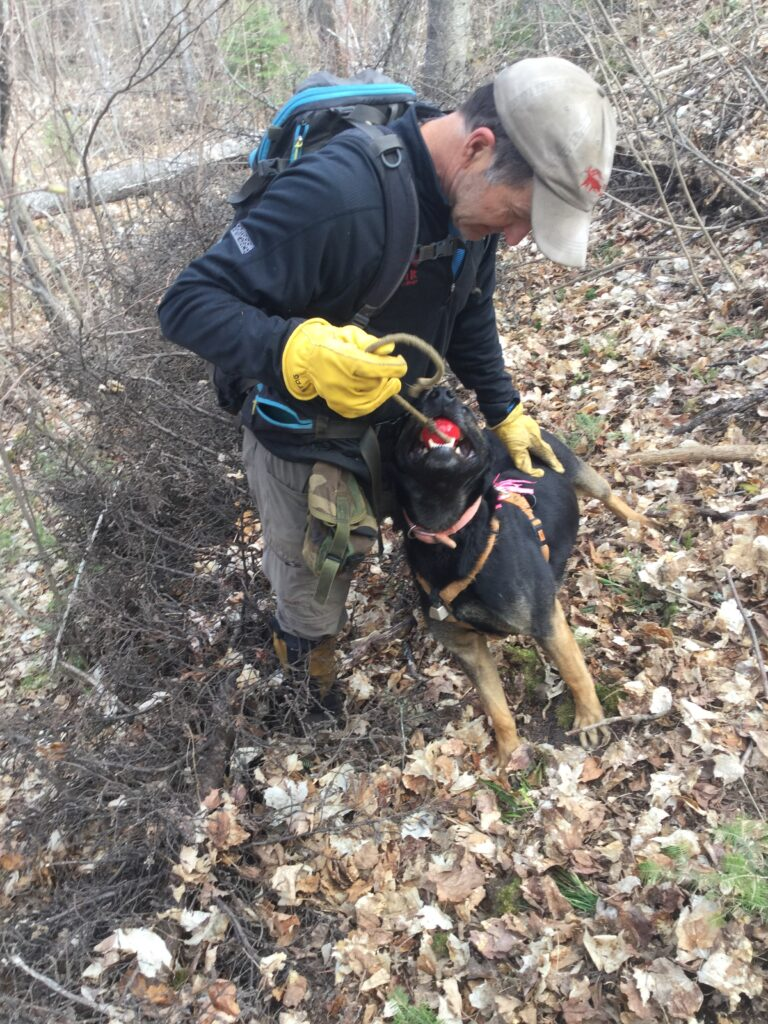 Conservation detection dogs increase efficacy for prey detection at carnivore GPS cluster sites during summer