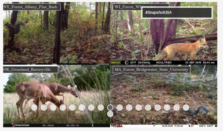 SNAPSHOT USA 2019: a coordinated national camera trap survey of the United States