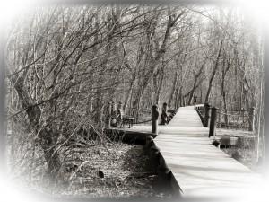 Jogging Path