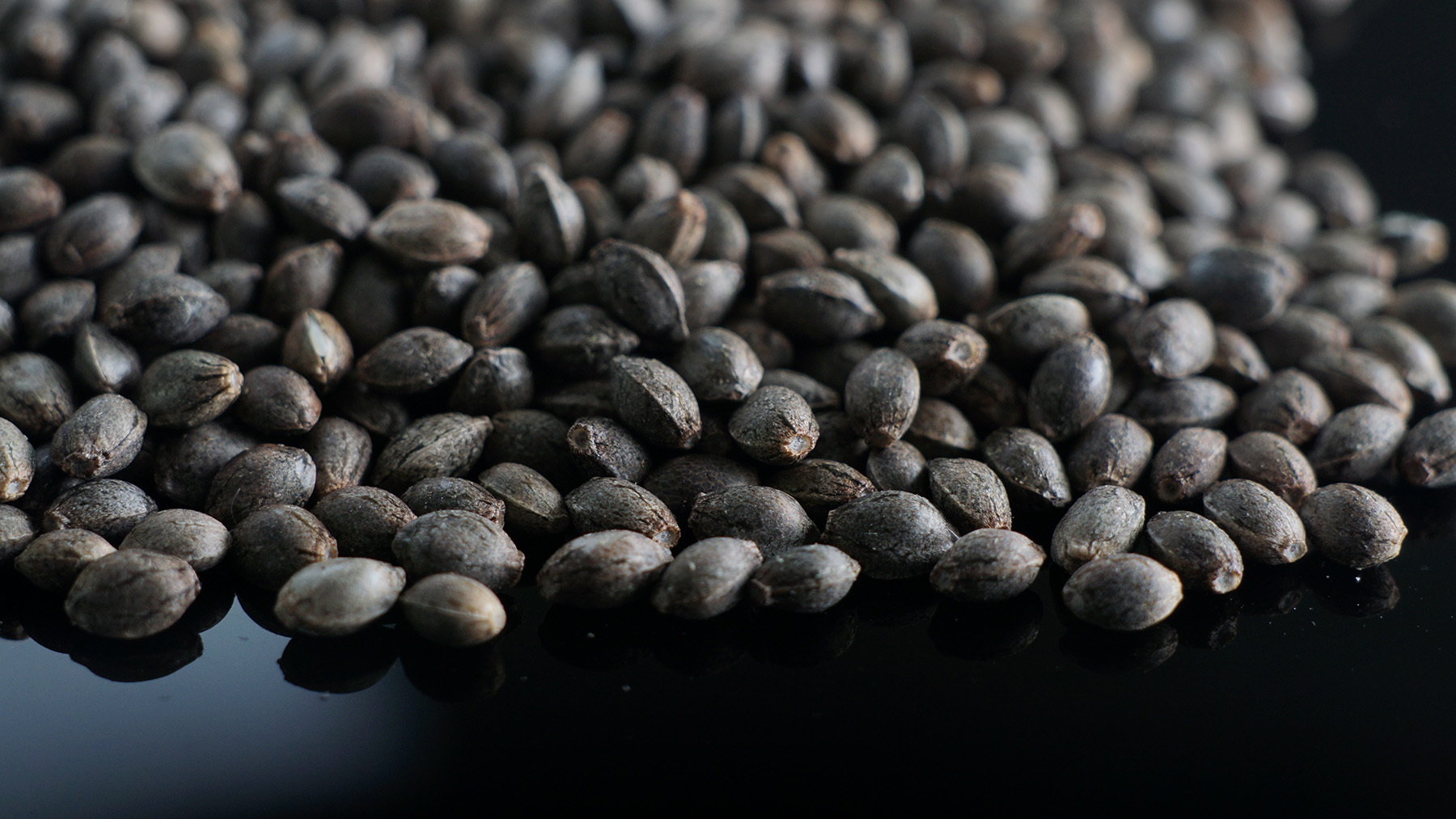 Close up of Painted Lady Hemp Seeds