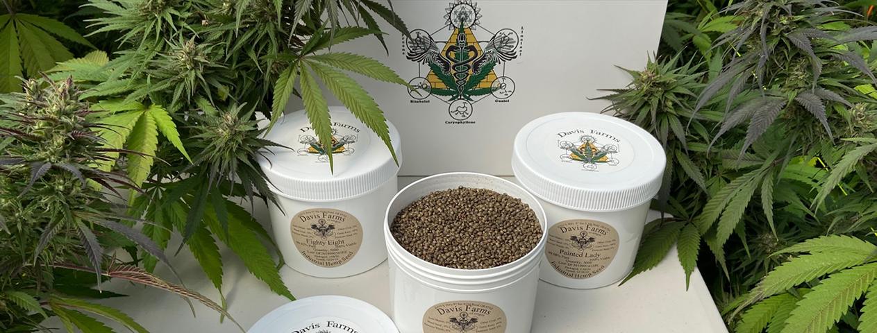 Full Greenhouse display of Davis Hemp Farms feminized seed packaging