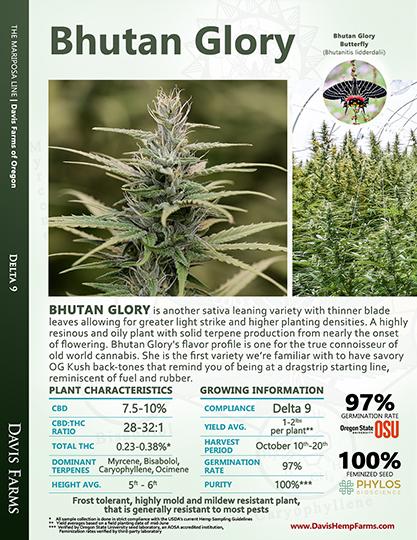 Available data for hemp variety Bhutan Glory