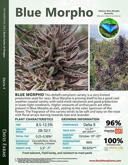 Available data for hemp variety Blue Morpho
