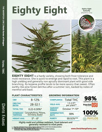 Available data for hemp variety Eighty Eight