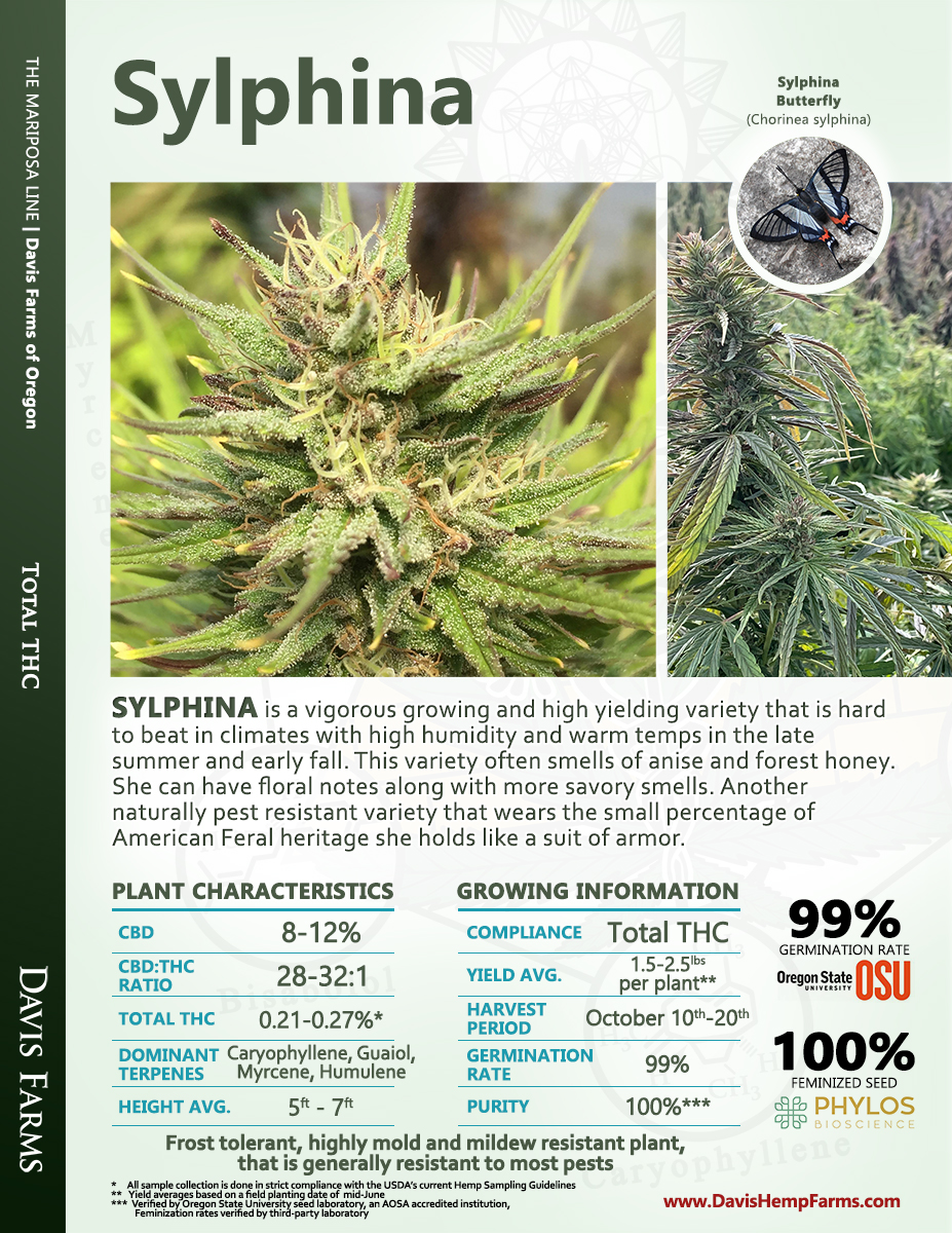 Available data for hemp variety Sylphina