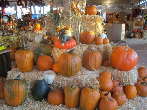 All These Pumpkins