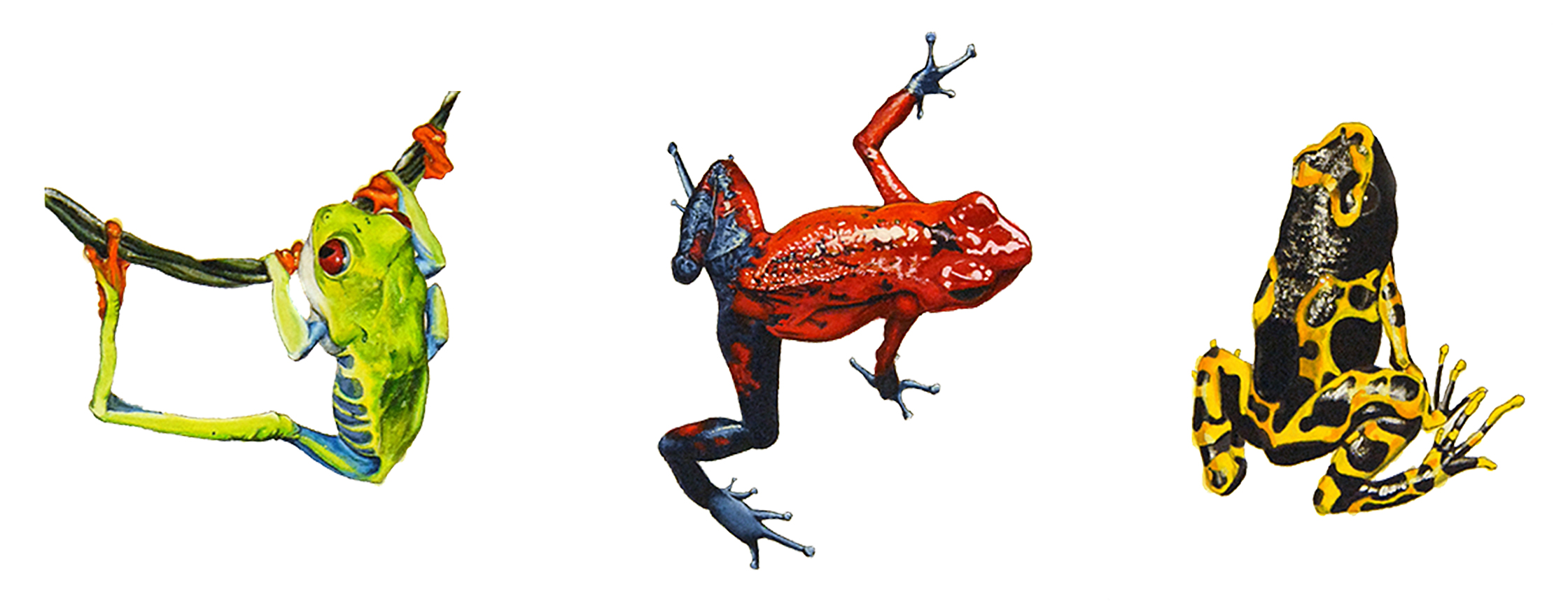 WEBSITE_ColorIlustrations_Frogs