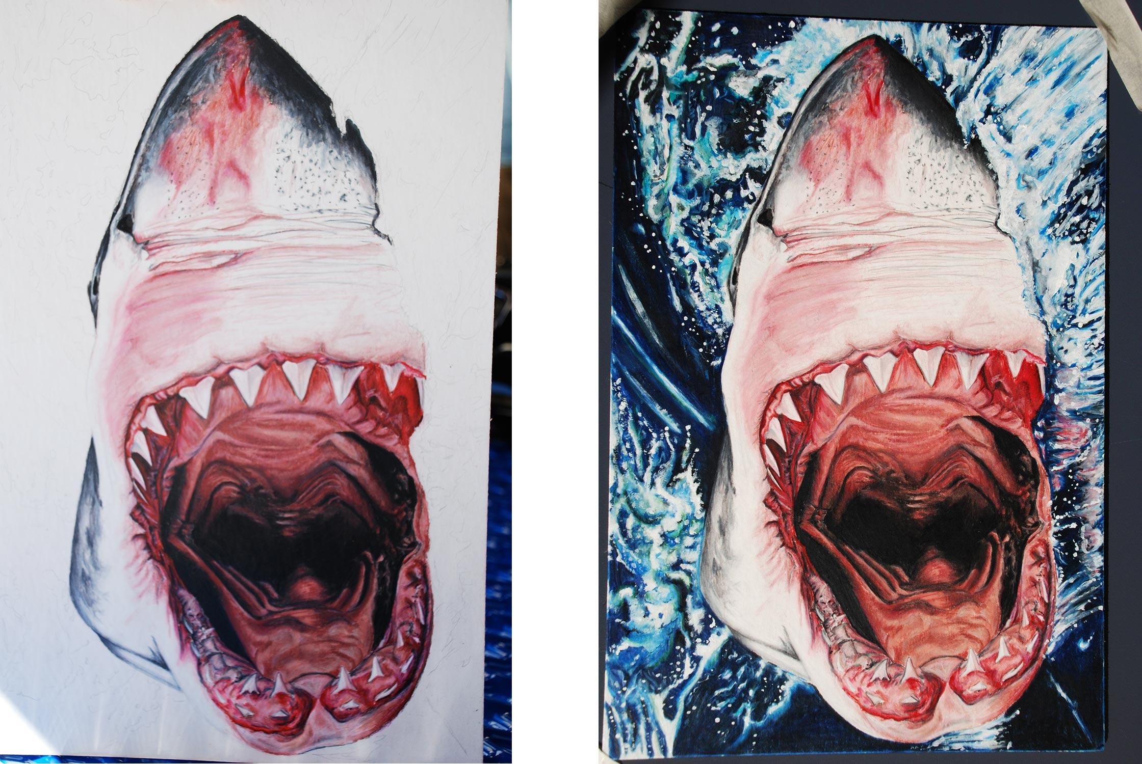 WEBSITE_ColorIlustrations_Shark