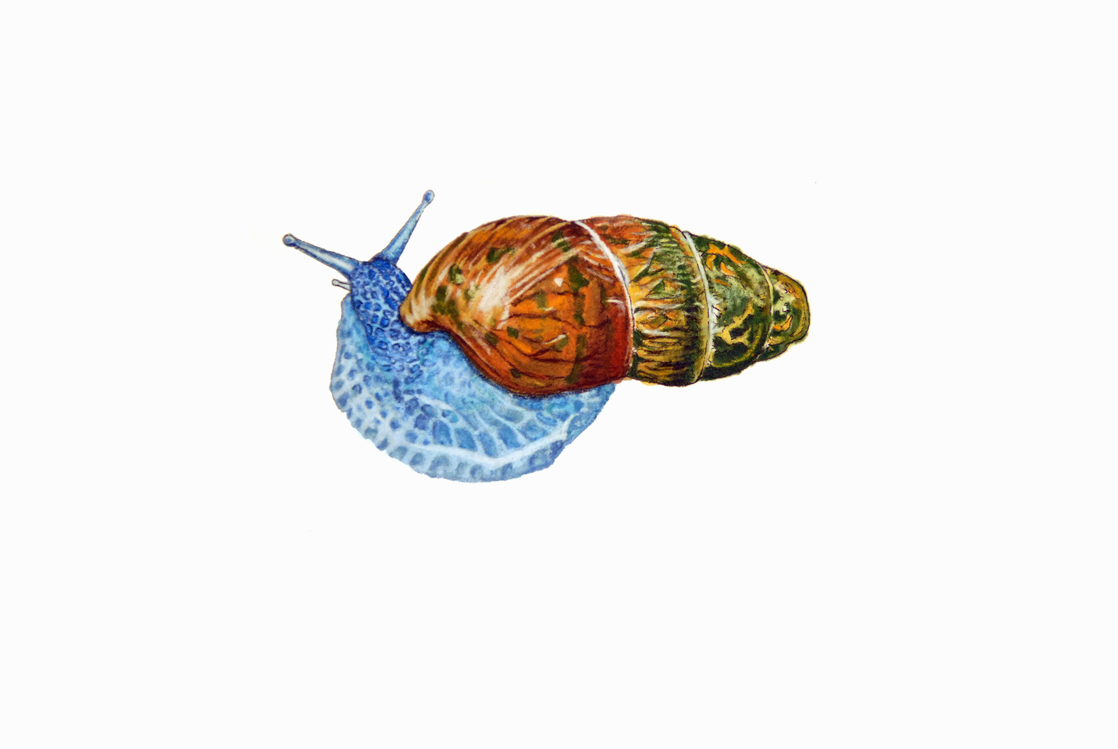 WEBSITE_ColorIlustrations_Snail