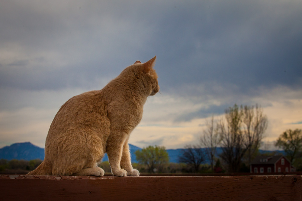 What a Barn Cat Knows About Change