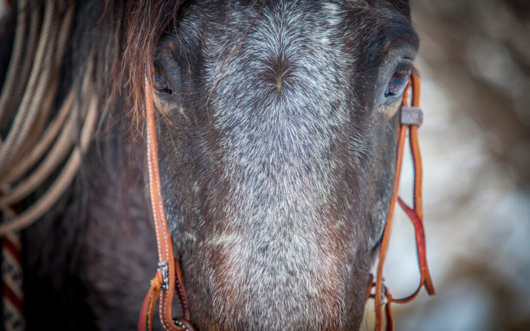 What a Gray Colt Knows About Curiosity and Success