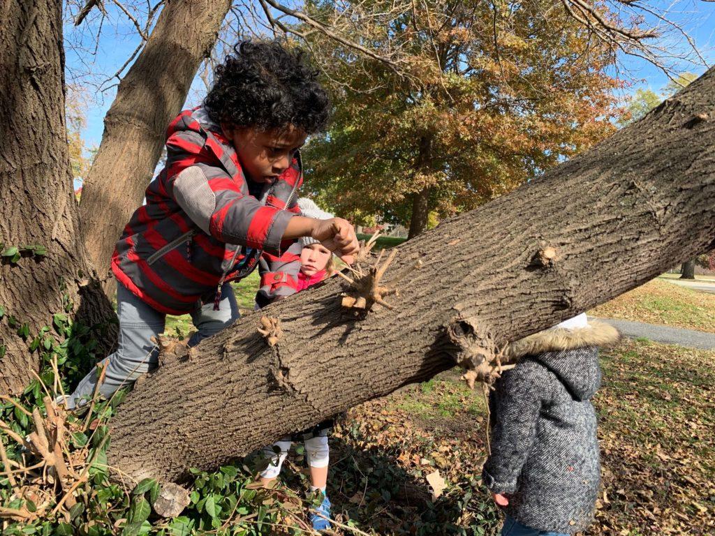 Kid climbing tree.