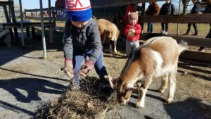 Kids feeding two goats