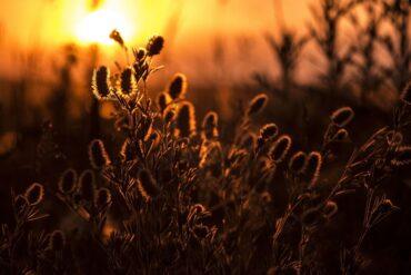 Healing Treatments for Sleep Onset Insomnia