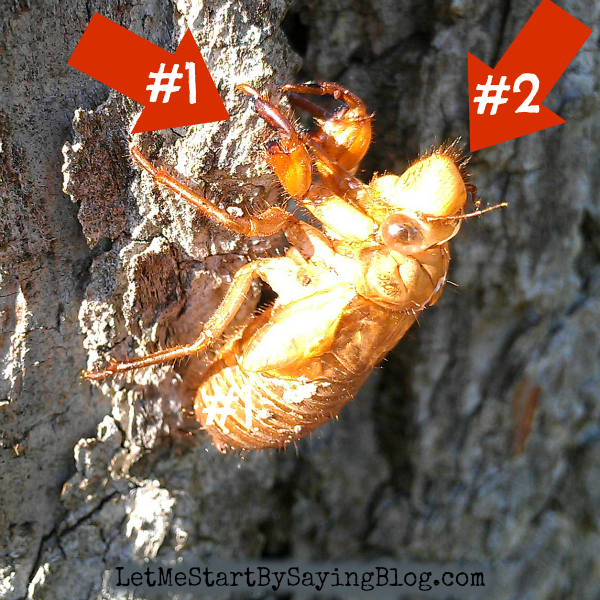 Question #1: How do dead shell things hold onto trees so well?  Question #2: How do dead shell things have HAIR? What the HELL is up with THAT??