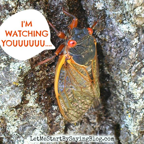 Cicada in New Jersey via @LetMeStart