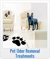 pet stain and odor remova