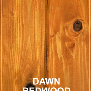 Dawn Redwood Jpeg