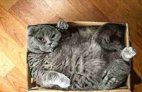 cat-in-box--horiz