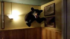 """JJ's """"Bear on the Wall"""""""
