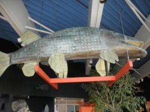 Tin Fish at the Tin Fish