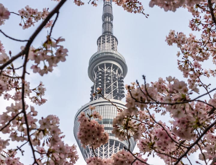 Top Things to Do in Tokyo in 2020: See cherry blossoms before the crowds