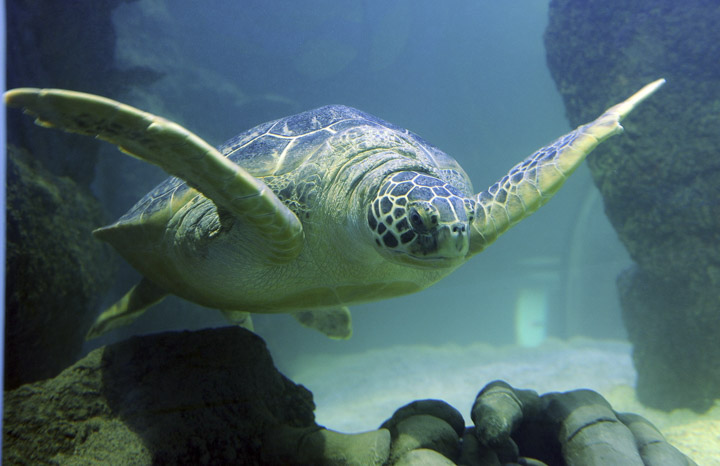 20 Top Things to Do in San Antonio in 2020: SEA LIFE Aquarium (opening Spring 2020)