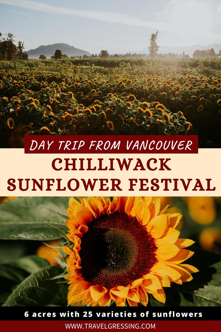 Chilliwack Sunflower Festival 2020: Date, Hours, Tickets Info