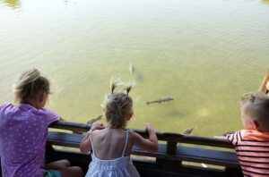 Heian Shrine, Shinto Shrine, Festival, Pond, Dragon Stones, Lilly Pads, Fish, Turtles, Ducks, Garden, Family Travel, Traveling with Family, Diapers On A Plane, Diapersonaplane