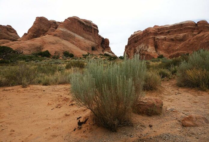 Arches National Park, Utah, Delicate Arch, Diapersonaplane, Diapers On A Plane, Traveling with Kids, Family Travel