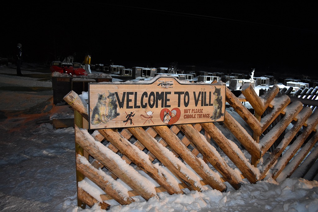 husky dog sledding in Norway at Vill in Tromso