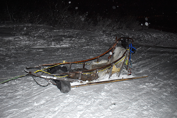 husky dog sledding in norway sled