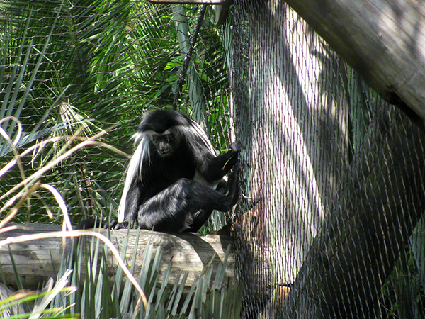 Kilimanjaro Safari, Disney's Animal Kingdom, Petting Zoo, Natural Habitat, Africa, Oasis, diapersonaplane, diapers on a plane, pandora, traveling with kids, family travel, creating family memories, Disney, Walt Disney World,