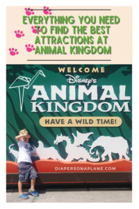 Everything You Need to Find the Best Attractions at Animal Kingdom from rides to food to shows!