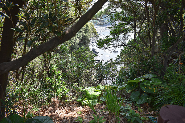 Exploring Nature on Jeju Island with Kids