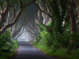 Creepy Road in Ireland