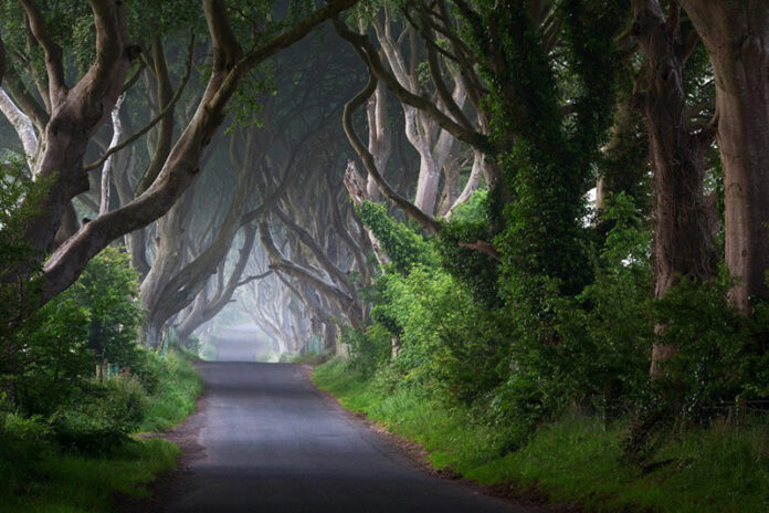 Creepy Road in Ireland