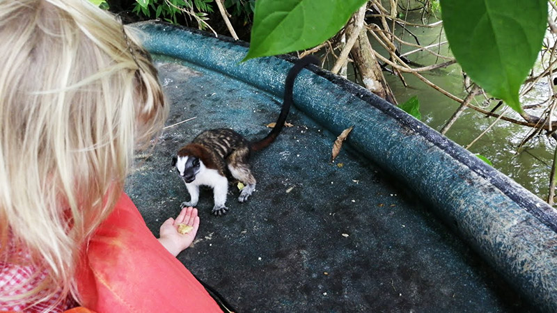 Feeding Monkeys in Panama on Monkey Island