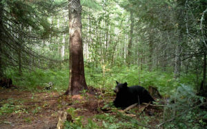 bear-guide-north-2