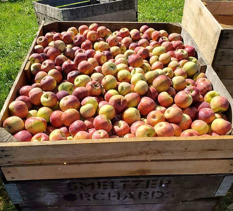 Apple Crates at the farmstand