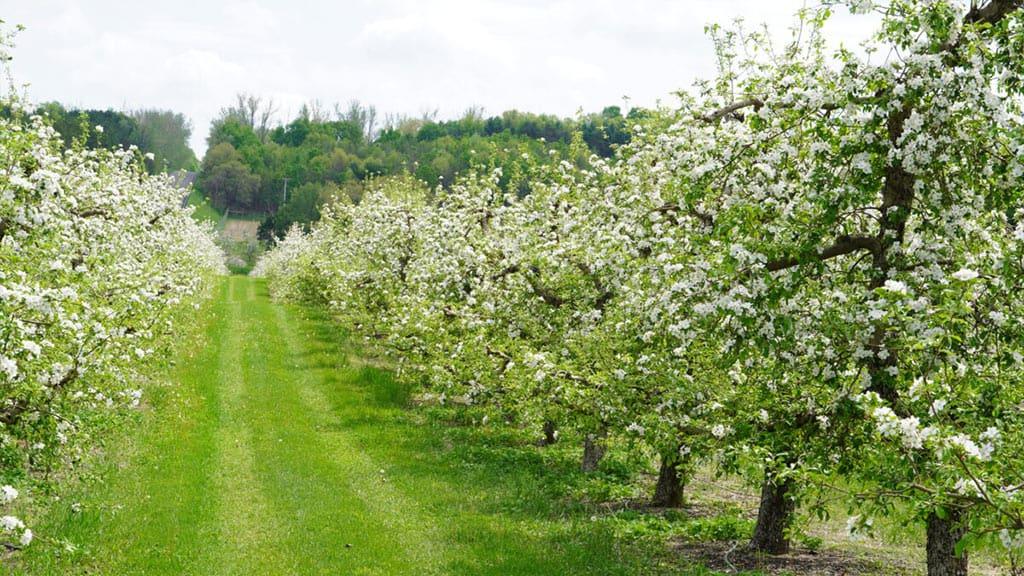 BrixStone Farms Orchard