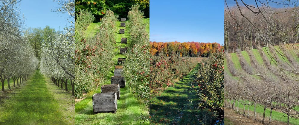BrixStone Farms Orchard