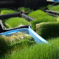 You can buy Microgreen Fodder Flakes from Us!!